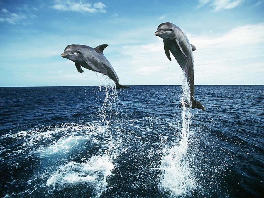 788-saut-de-dauphins-WallFizz