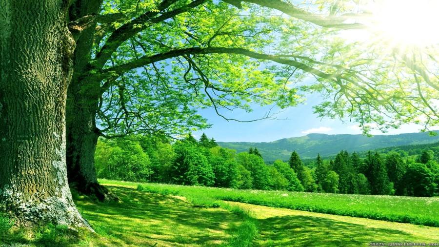 summer-nature