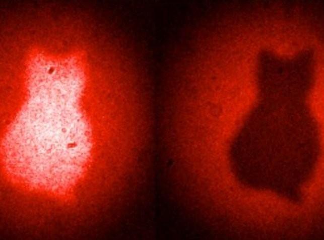 Kot Schrödingera wreszcie sfotografowany! 2014