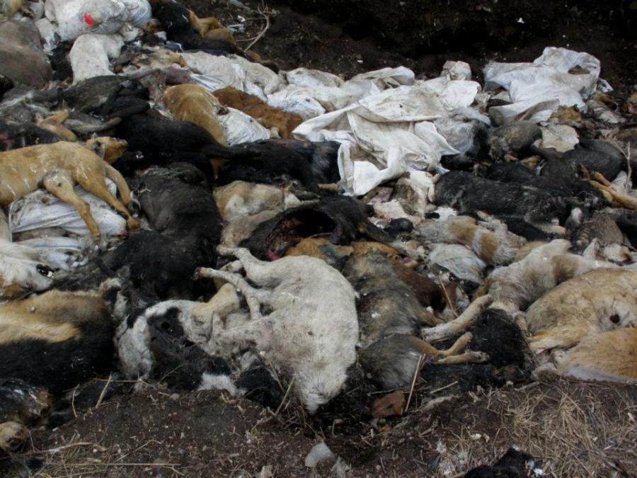 rzeź psów Ukraina2