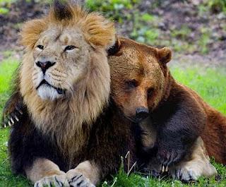 leo_bear