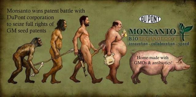 gmo-monsanto